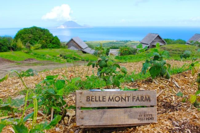 Belle Mont Farm at Kittitian Hill
